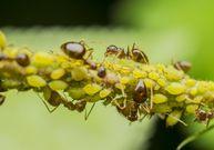 Jak ze zahrady vypudit mravence a je to vůbec třeba?