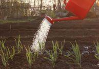 Jak pečovat o půdu, aby držela co nejlépe vodu?