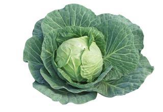 Zelí hlávkové | Brassica oleracea