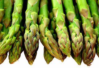 Chřest lékařský | Asparagus officinalis