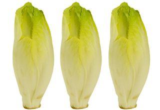 Čekanka salátová | Cichorium intybus var. foliosum