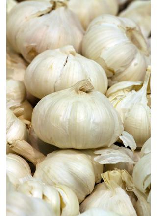 Česnek kuchyňský | Allium sativum