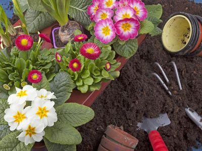 Cestou, jak nahradit vzácnou rašelinu, je začít hrát si s kompostem