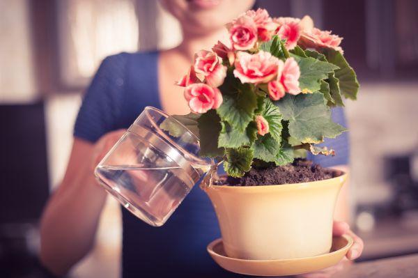Картинки по запросу поливают цветы дома