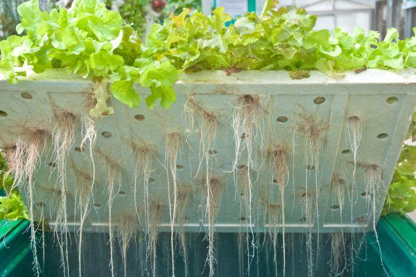 Proč a jak pěstovat zeleninu hydroponicky? - ČESKÉSTAVBY.cz