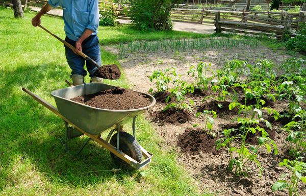 Kvalitní kompost zužitkujeme na záhonech i v mobilních nádobách