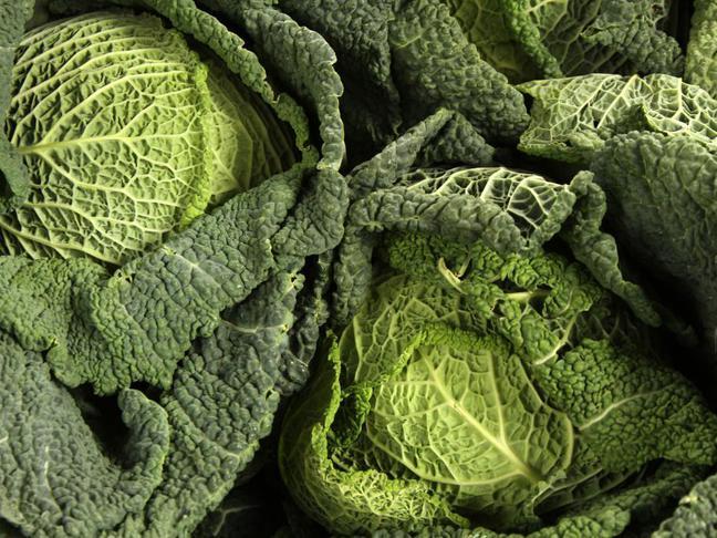Kapusta hlávková | Brassica oleracea L. conv. oleracea var. sabauda L